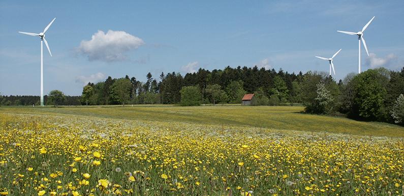 Bluehende-Wiesen_Renquishausen